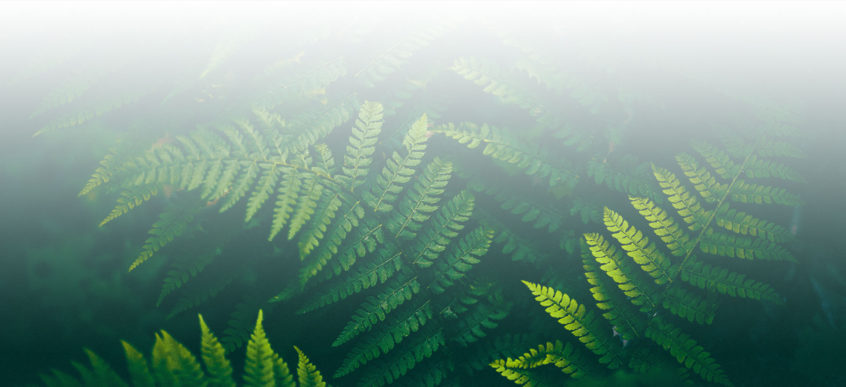 Fern Fade Background